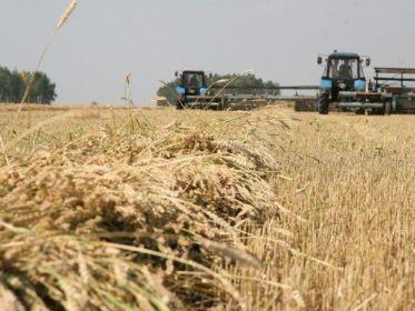 Azərbaycan Qazaxıstandan 1 milyon tondan artıq taxıl alacaq