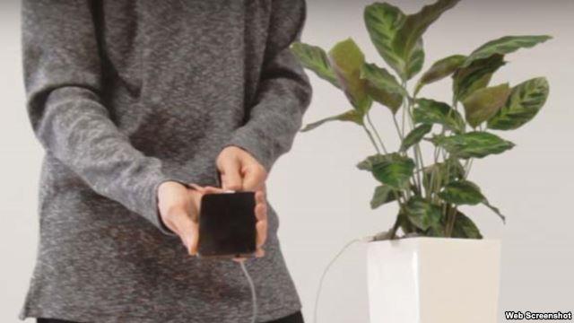 Smatfonlar bitkidən enerji yığacaq